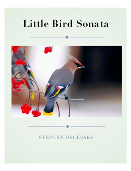 Little Bird Sonata